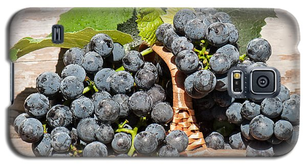 Grapes And Leaves In Basket Galaxy S5 Case
