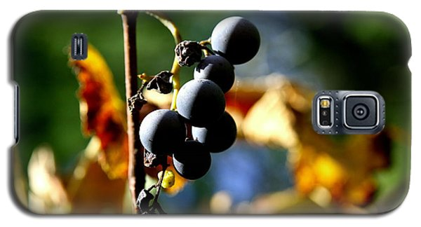 Grapes On The Vine No.2 Galaxy S5 Case
