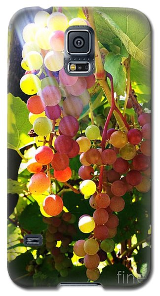 Galaxy S5 Case featuring the photograph Grapes  by Rose Wang