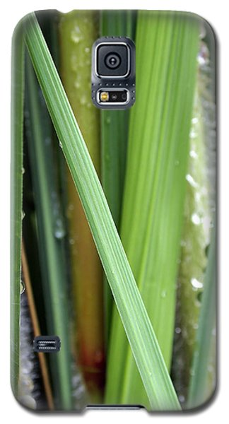 Galaxy S5 Case featuring the photograph Grass Blades Morning Dew by Deborah Fay