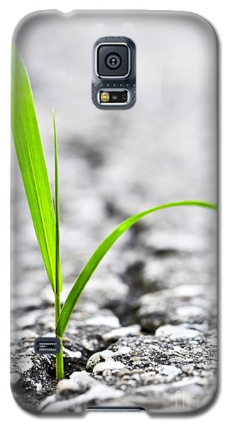 Garden Galaxy S5 Case - Grass In Asphalt by Elena Elisseeva