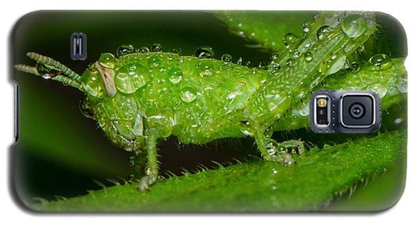 Grass Hopper In The Rain Galaxy S5 Case
