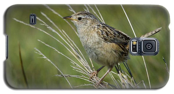 Grass Wren Galaxy S5 Case by John Shaw