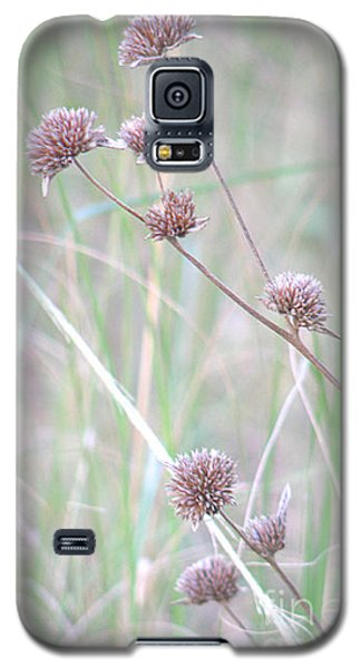 Grasses And Seeds Galaxy S5 Case