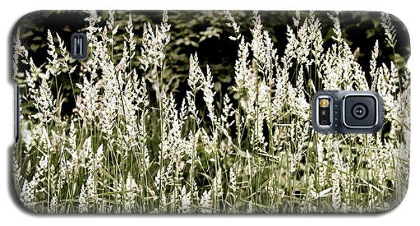 Grasses In White Galaxy S5 Case by Susan Crossman Buscho