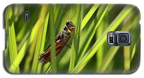 Grasshopper In Grass Galaxy S5 Case