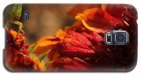 Galaxy S5 Case featuring the photograph Grasshopper In The Marigolds by Joel Loftus