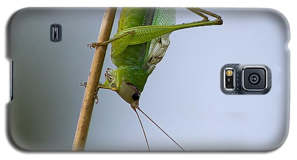 Grasshopper Galaxy S5 Case by Anne Rodkin