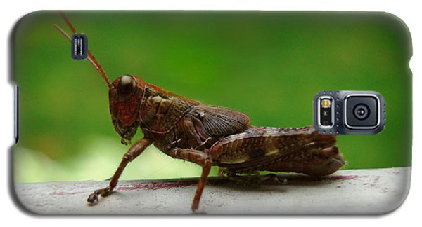 Galaxy S5 Case featuring the photograph Grasshopper by Kara  Stewart