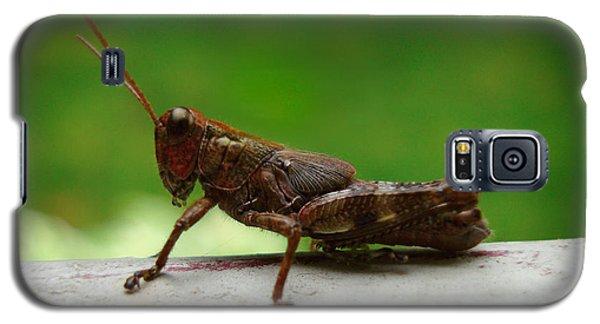 Grasshopper Galaxy S5 Case by Kara  Stewart
