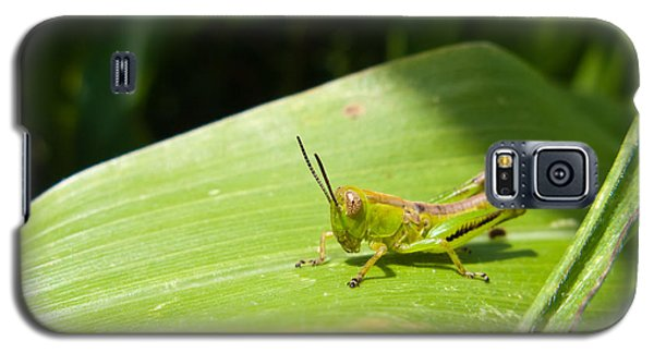 Grasshopper On Corn Leaf   Galaxy S5 Case