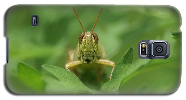 Galaxy S5 Case featuring the photograph Grasshopper Portrait by Olga Hamilton