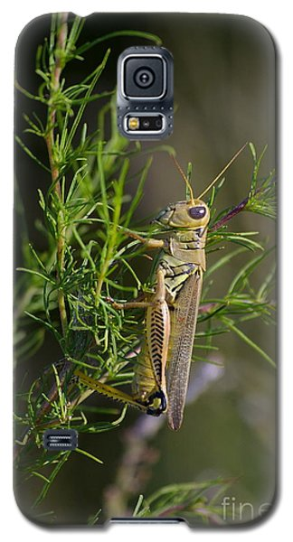 Galaxy S5 Case featuring the photograph Grasshopper by Tannis  Baldwin