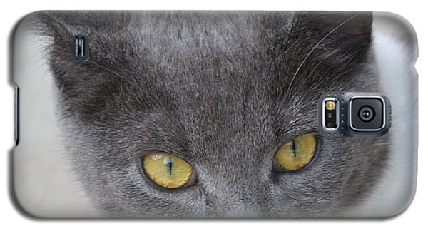 Gray Cat - Listening Galaxy S5 Case