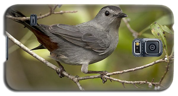 Galaxy S5 Case featuring the photograph Gray Catbird by Meg Rousher