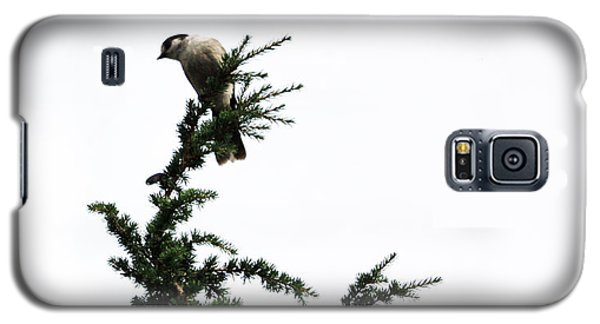 Galaxy S5 Case featuring the photograph Gray Jay by Gerry Bates