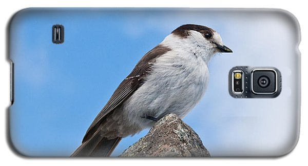 Gray Jay With Blue Sky Background Galaxy S5 Case