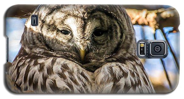 Gray Owl Galaxy S5 Case