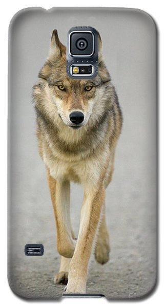 Gray Wolf Denali National Park Alaska Galaxy S5 Case