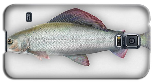 Grayling - Thymallus Thymallus - Ombre Commun - Harjus - Flyfishing - Trout Waters - Trout Creek Galaxy S5 Case