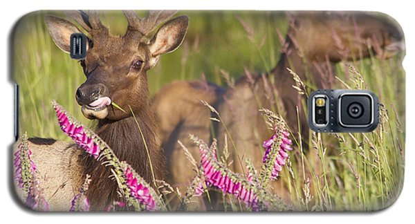Grazing At Dusk Galaxy S5 Case