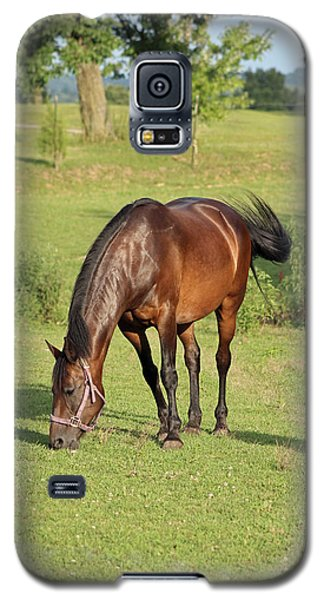 Grazing Mare Galaxy S5 Case