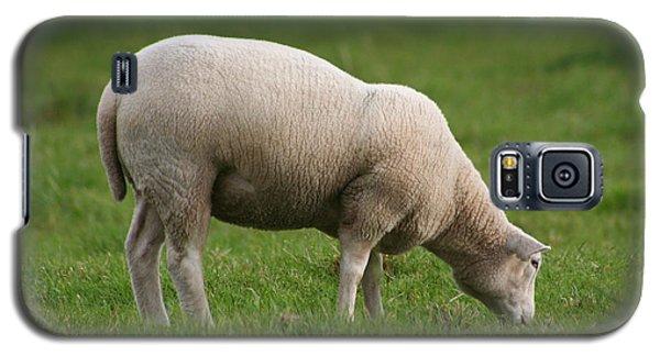 Grazing Sheep Galaxy S5 Case
