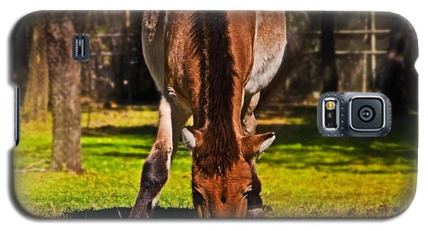 Grazing With An Attitude Galaxy S5 Case