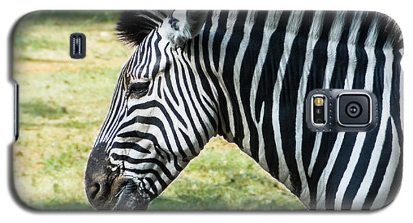 Grazing Zebra Galaxy S5 Case