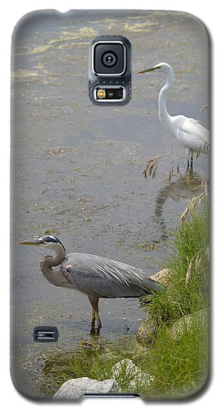 Galaxy S5 Case featuring the photograph Great Blue And White Egrets by Judith Morris