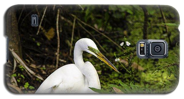 Great Blue Heron - White Galaxy S5 Case