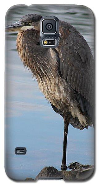 Great Blue Heron At Deep Water Lagoon Galaxy S5 Case by Robert Banach