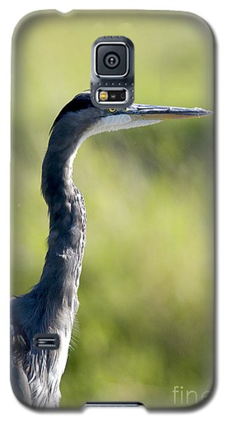 Great Blue Heron Backlit Galaxy S5 Case