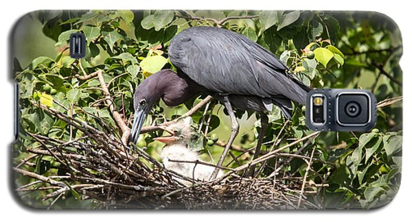 Great Blue Heron Chicks In Nest Galaxy S5 Case