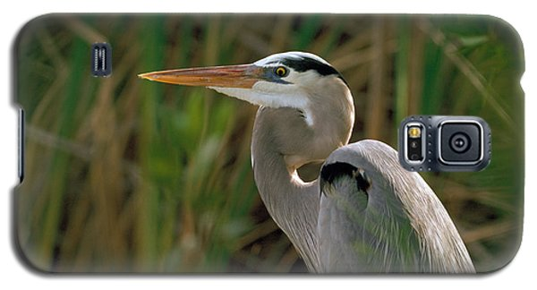 Galaxy S5 Case featuring the photograph Great Blue Heron by Doug Herr