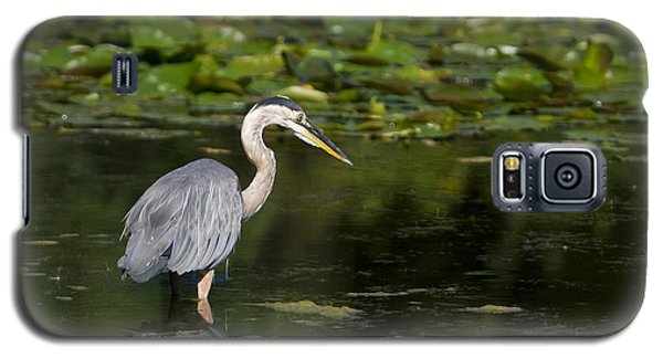 Great Blue Heron Hunting Galaxy S5 Case