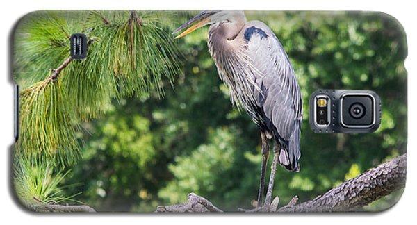 Great Blue Heron I Galaxy S5 Case