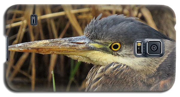 Galaxy S5 Case featuring the photograph Great Blue Heron  by I'ina Van Lawick