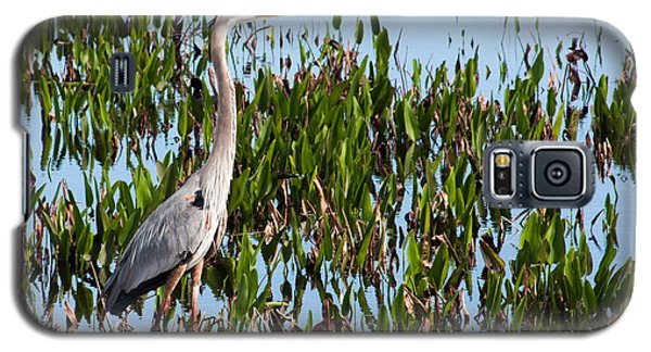 Great Blue Heron In Pickerelweed Galaxy S5 Case