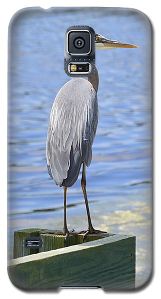 Galaxy S5 Case featuring the photograph Great Blue Heron by Judith Morris