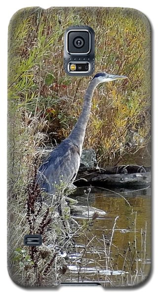 Great Blue Heron - Juvenile Galaxy S5 Case