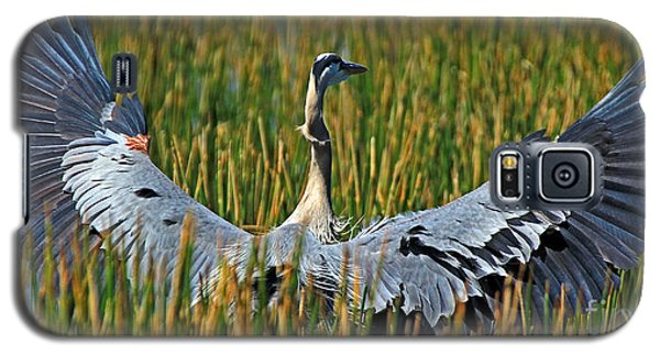 Galaxy S5 Case featuring the photograph Great Blue Heron Landing by Larry Nieland