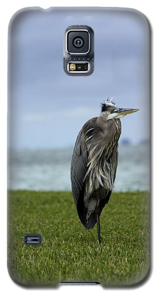 Galaxy S5 Case featuring the photograph Great Blue Heron by Marta Alfred