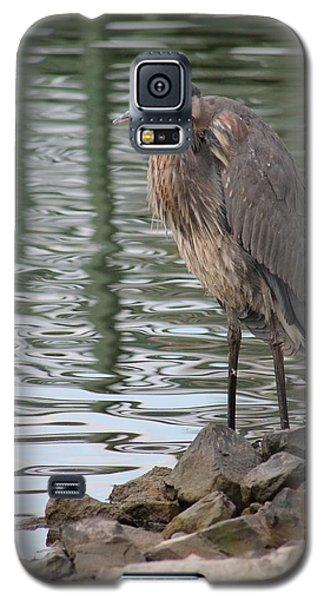 Galaxy S5 Case featuring the photograph Great Blue Heron On Watch by Robert Banach