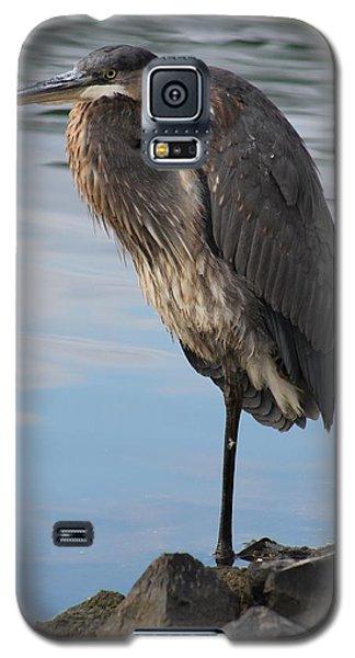 Great Blue Heron One Legged Stance Galaxy S5 Case by Robert Banach