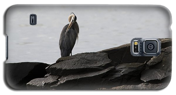 Galaxy S5 Case featuring the photograph Great Blue Heron Preening by Rebecca Sherman