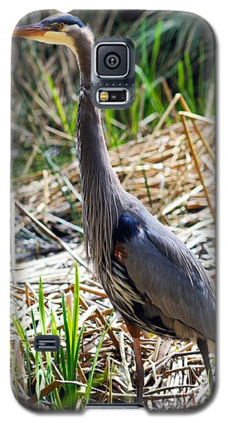 Great Blue Heron Standing Tall Galaxy S5 Case
