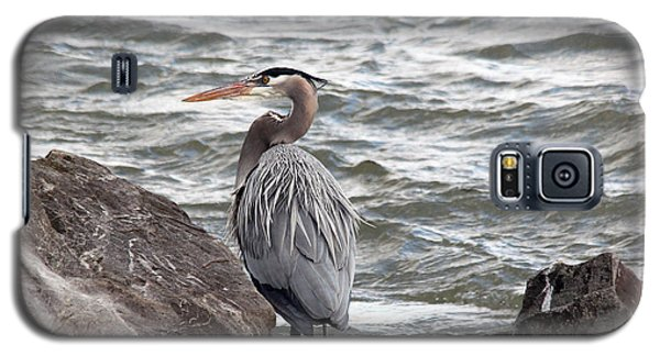 Galaxy S5 Case featuring the photograph Great Blue Heron by Trina  Ansel