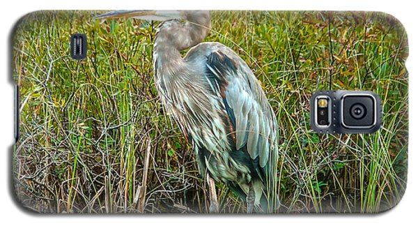 Great Blue Heron Waiting For Supper Galaxy S5 Case by Eti Reid