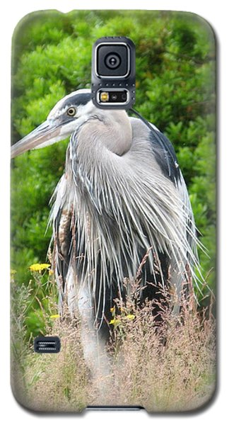 Great Blue Heron Watching And Waiting Galaxy S5 Case